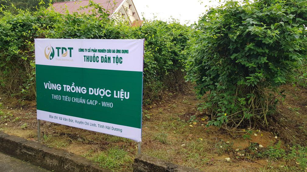 Vườn dược liệu tại Chí Linh - Hải Dương của Trung tâm Thuốc dân tộc